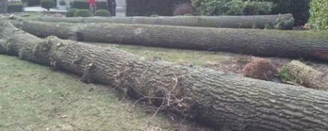 Vellen en verwijderen van bomen