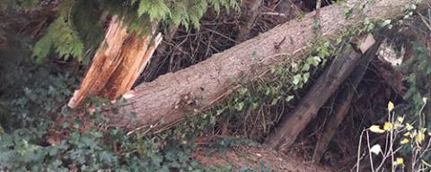 Stormschade bij bomen opruimen