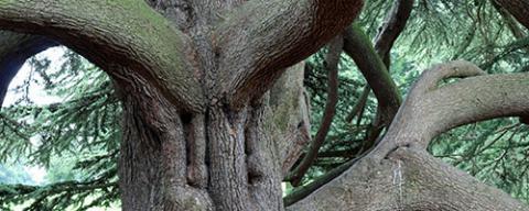 Veteraanbomen